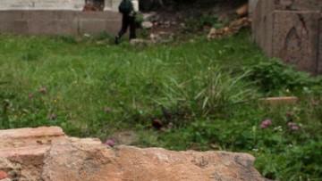 Петергоф, Петродворец, Нижняя дача, руины, парк Александрия