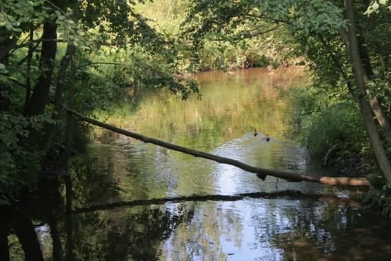 рыбалка черная речка сертолово