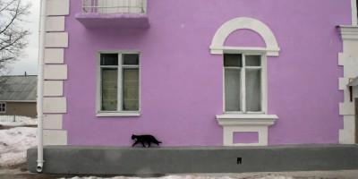 Никольское, сиреневые дома, кошка