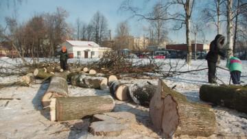 В Выборгском саду рубят деревья, взамен обещают новые