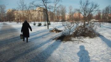В Выборгском саду вырубают деревья