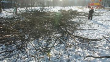 Деревья вырубают в Выборгском саду
