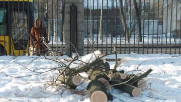 Вырубка деревьев в Выборгском саду