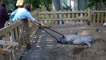 Мини-зоопарк в ЦПКиО на Елагином острове