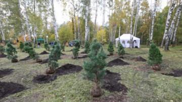 Деревья, посаженные в Удельном парке
