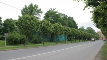 Софийский бульвар в Пушкине
