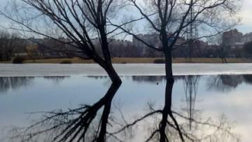 Деревья в пруду парка Интернационалистов