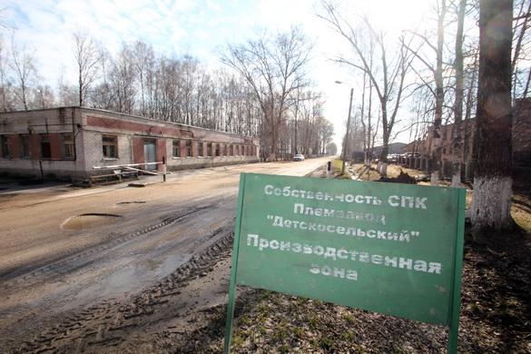Производственная зона племзавода Детскосельский