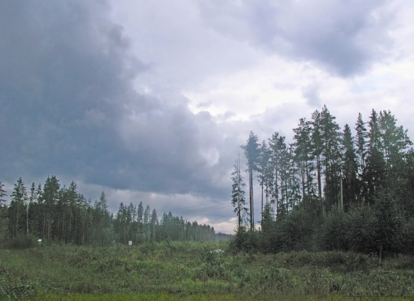 Лес в Юкках