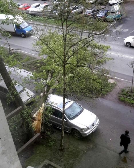 Упало дерево на Трамвайном
