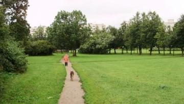 Можайский сквер и собака