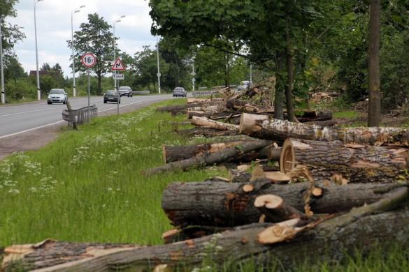 Петербургское шоссе, вырубка