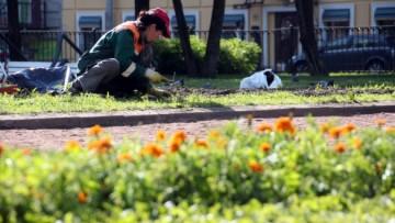 Посадка цветов в Покровском сквере