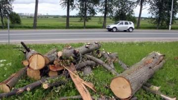 Срубленные деревья