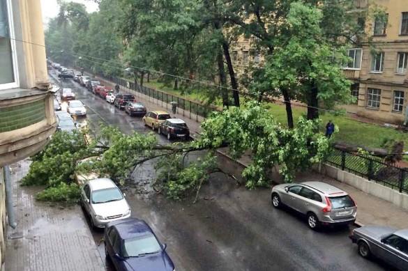 Таврическая улица, упало дерево