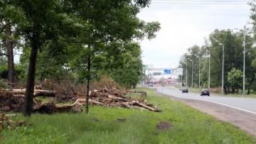 Вырубка деревьев на Петербургском шоссе