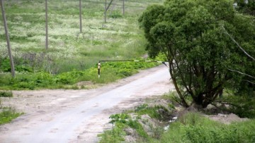 Шлагбаум на Шушарской дороге