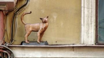 Кошка Василиса на Малой Садовой улице