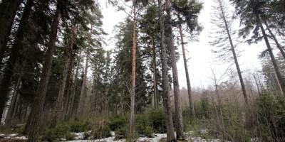 Комарово, лес