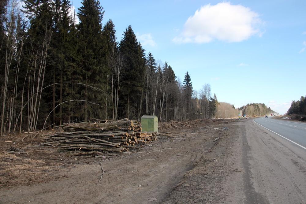 Вырубили деревья вдоль трассы Нарва