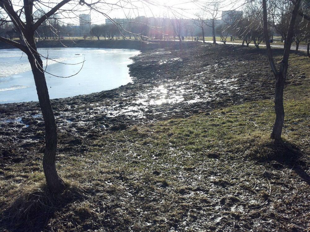 Пруд в Полюстровском парке