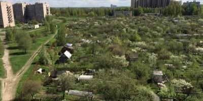 Садоводство Нева в Металлострое