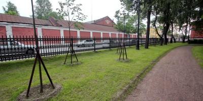 Кронштадт, Романовский сквер, новые деревья