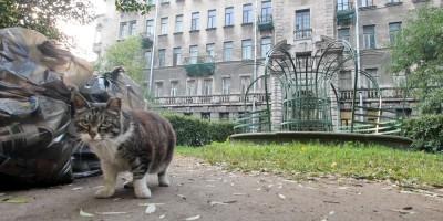Литейный, кошка