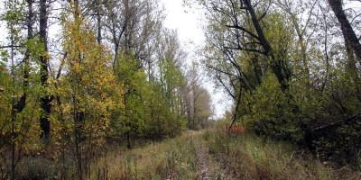 Варшавская железная дорога, лесополосы