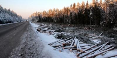 Скандинавское шоссе, вырублен лес