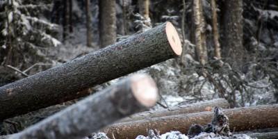 Скандинавское шоссе, вырубленный лес
