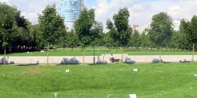 Парк 300-летия СПб, провал