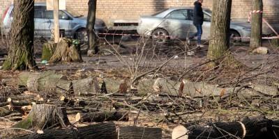 Улица Васи Алексеева, сквер, рубят деревья