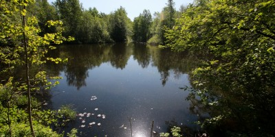 Конная Лахта, Петровский пруд