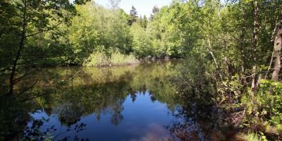 Конная Лахта, Петровский пруд, место гром-камня