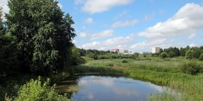 Муринский парк, болото