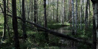 Буферная зона Юнтоловского заказника, болото
