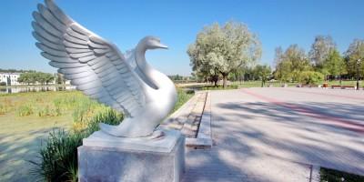 Колпино, парк на Красной улице, лебедь