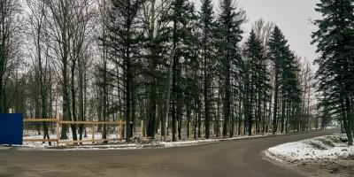Лес в Ленсоветовским