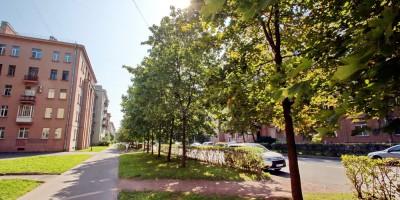 Улица Стахановцев, деревья