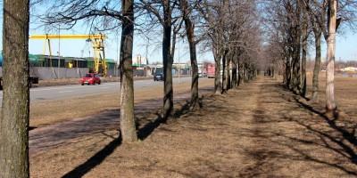 Ивановский сад, аллея