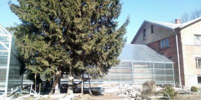 Новая оранжерея в парке Лесного института