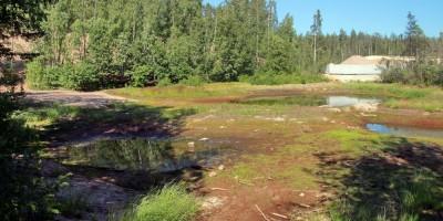 Сестрорецк, Ржавая канава, пруд