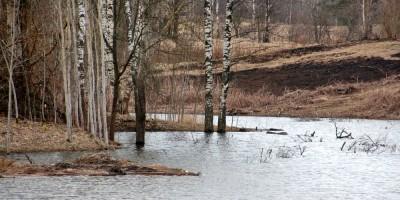 Петергоф, пруд, затопленные деревья