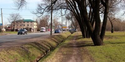 Таллинское шоссе и деревья